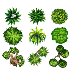 Topview of the different plants vector