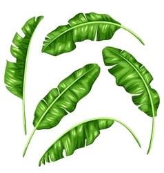 Banana leaves set image of decorative tropical vector