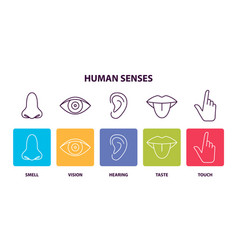 human senses informative poster with body parts vector image