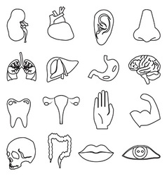 Body parts line icons set vector