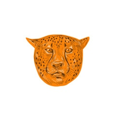 Cheetah Head Drawing vector image vector image