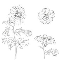 Flowers mallow contours vector image vector image