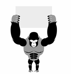 Gorilla and banner Big strong scary monkey Space vector image vector image