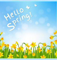 Hello spring poster with narcissus vector