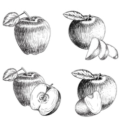 Set of hand drawn apple vintage sketch style vector