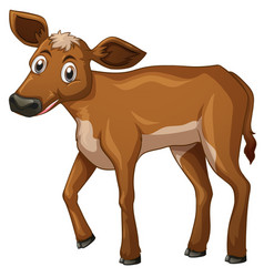Little calf with brown fur vector