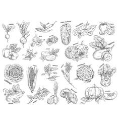 Sketch of vegetarian food vegetables vector