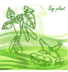soy plant set hand drawn soy beans on watercolor vector image