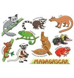Set of cute animals cartoon in the Madagascar vector image