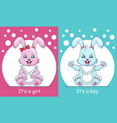 Baby shower greeting card with rabbits boy and vector