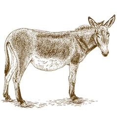 Engraving donkey vector
