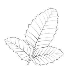 Naturalistic autumn leaves on white vector