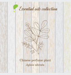 Pure essential oil collection chinese perfume vector