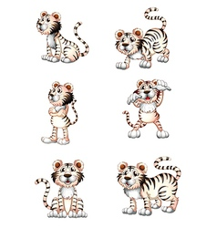 Tigers in six different positions vector