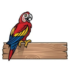 Red macaw bird vector