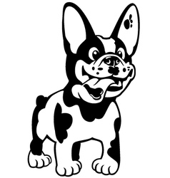 cartoon french bulldog black white vector image