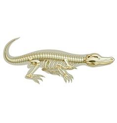 Crocodile skeletal system vector