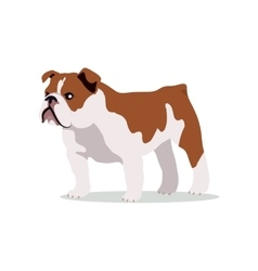 English Bulldog Flat Design vector image vector image