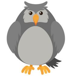 Gray owl on white background vector