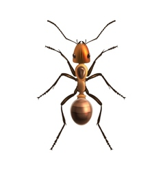 Realistic ant isolated vector image vector image