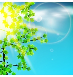 Green leaves and sun vector