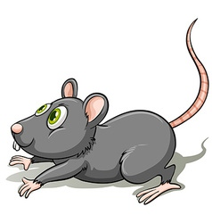 A gray rat vector