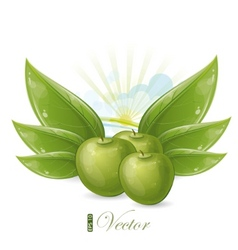 green apples and leaves against the sunshine vector image