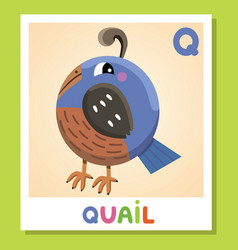 q is for quail letter q quail cute vector image
