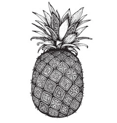 Hand drawn graphic ornate pineapple fruit vector