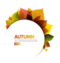Autumn floral background vector