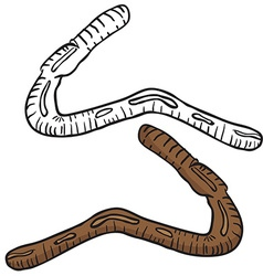 lobworm vector image