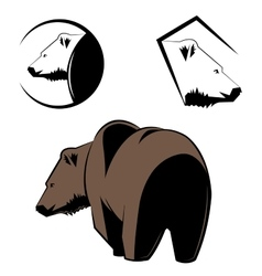 Depicting a grizzly bear vector