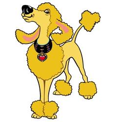 cartoon poodle vector image