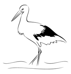 Stork on sketch vector image vector image