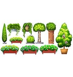 Set of decorative plants vector