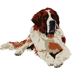 Saint Bernard dog breed vector image vector image