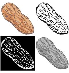 Peanut vector image