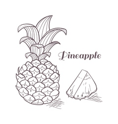 Engraving pineapple vector