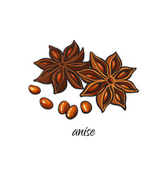Flat sketch dry anise star with seeds vector