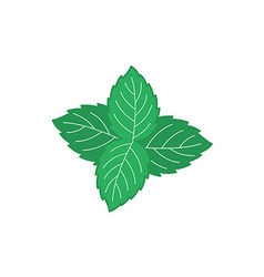 Mint leaves Four green mint leaves color symbol vector image vector image