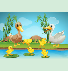 mother duck and ducklings at the river vector image