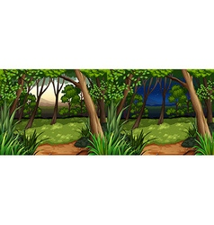 Forest scene at daytime and nighttime vector