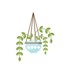 Epipremnum house plant indoor flower in pot vector