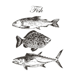 Fish sketch drawing - salmon trout carp vector