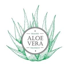 hand drawn botanical Aloe Vera vector image