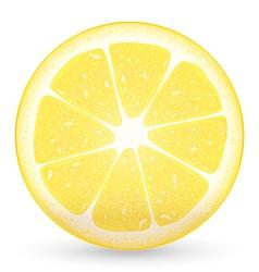 Sliced lemon vector
