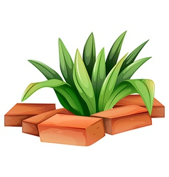 A plant with elongated leaves vector image