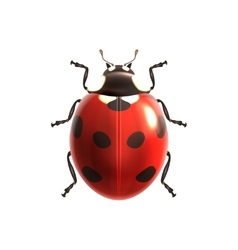 Ladybug realistic isolated vector image