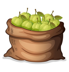 A sack of guavas vector image vector image