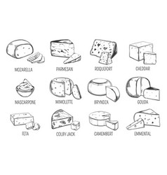 set of isolated sketches of cheese types vector image vector image